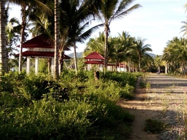 Fasilitas bangunan yang disipakan pemerintah kabupaten Bolmut dikerumuni rumput liar