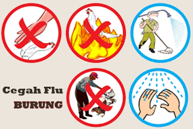 Distan Bolmong Antisipasi Serangan Flu Burung