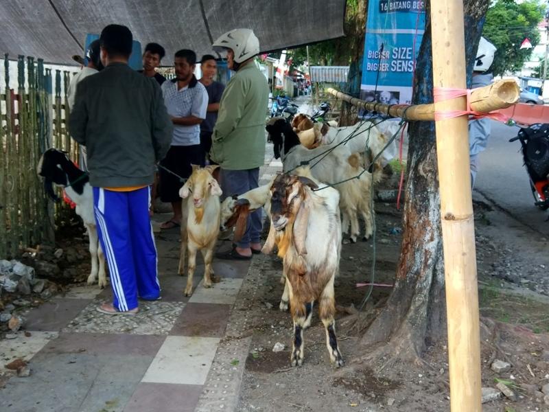 Kesehatan Hewan Kurban yang Dijual di Kotamobagu Akan Diperiksa