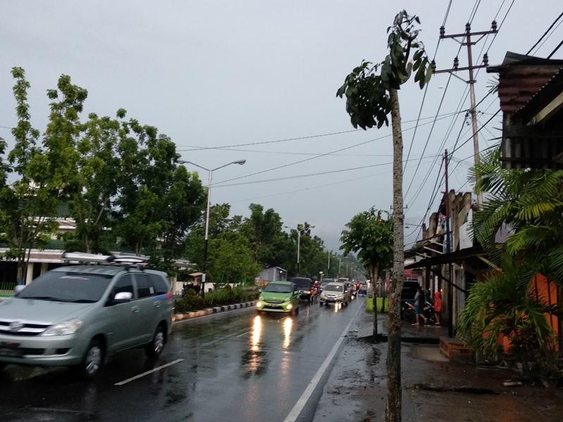 Menurut Tatong, pohon-pohon tersebut di tanam oleh Pemerintah Kota (Pemkot) Kotamobagu bertujuan untuk mengurangi polusi yang disebabkan oleh kendaraan bermotor