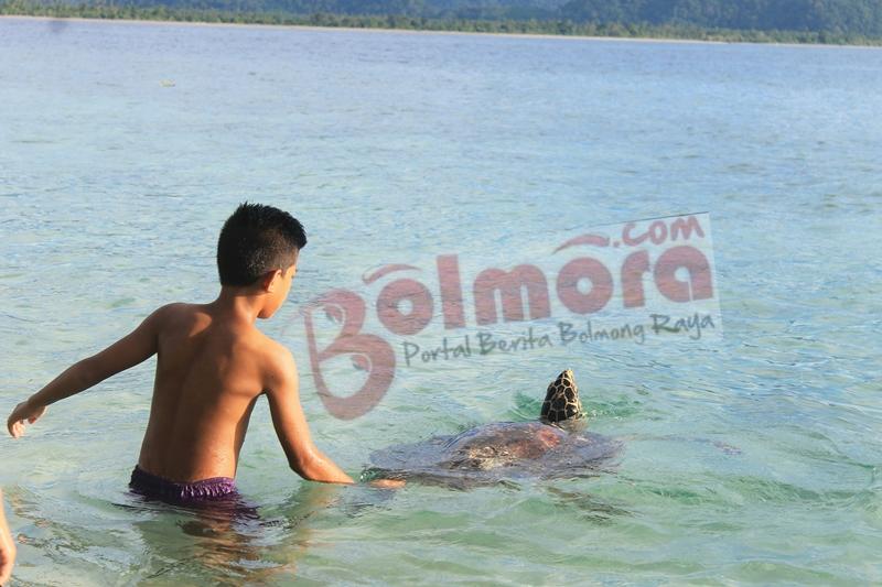 Bingung Mau Liburan Kemana?, Pulau Molosing Tawarkan Wisata Bersama Penyu