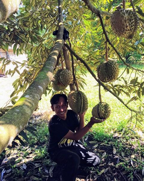 Kotamobagu Memiliki Perkebunan Durian Montong Beromzet Rp240 Juta Setiap Panen