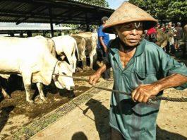Pemda Bolmong Akan Sembelih Enam Ekor Sapi, Yasti Sumbang Tujuh Ekor dan Gubernur Sulut Dua Ekor