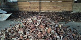 Kopra Jadi Salah Satu Komoditi Andalan Petani Poyowa Besar 1