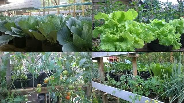 Pekarangan Rumah Bisa Dijadikan Lahan Pertanian