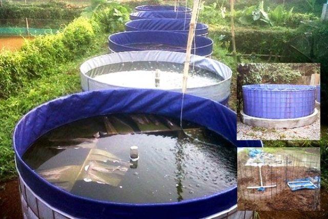 DKP Bolmong Terapkan Sistem Bioflok untuk Budidaya Ikan ...