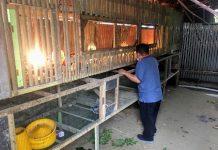 Peternak Ayam Pedaging Mandiri Menarik Perhatian Wakil Wali Kota