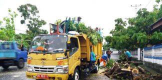 Dinas PRKP Evakuasi Pohon Tumbang di Depan Kantor PMPTSP