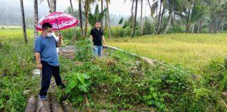 Hujan-hujanan, Wawali Periksa Jembatan Anggaran Dandes 2017 yang Dikeluhkan Masyarakat