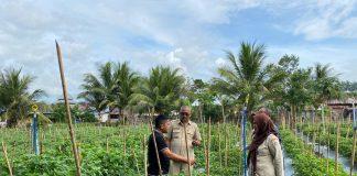 Hasilkan Cabe 15 Ton Sepekan, Anggota KMT ini Mendapatkan Kunjungan Dinas Pertanian