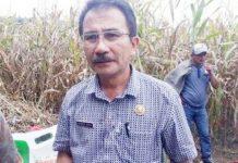 Dinas Pertanian Bolmong Targetkan 37 Ribu Hektare Lahan Jagung