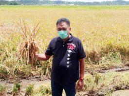 Olly Sebut Panen Padi Bedampak pada Ketahanan Pangan Dimasa Pandemi Covid