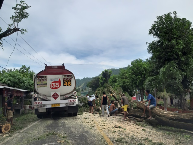 Waspada Bencana, Warga Tebang Pohon Tua