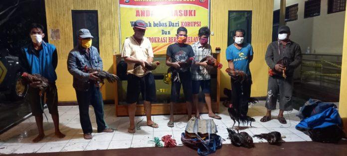 Polres Buol Amankan Tujuh Pelaku Judi Sabung Ayam
