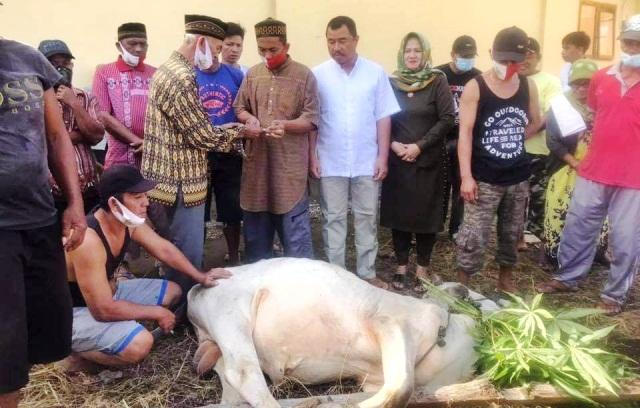 PHBI Bolmong Mencatat 338 Hewan Kurban Disembelih pada Hari Raya Idul Adha 1442 Hijriyah