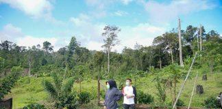 Wali Kota Tinjau Lokasi Perkebunan Kopi Mobalang